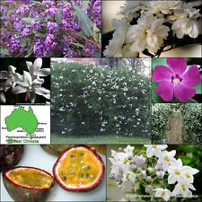 8 Vines Mixed 4 Types Climber Rambler Flowering Garden Plants Screen Hedge Vine