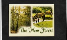 """Postcard- """"C1990 Ponies in The New Forest, Hampshire"""""""