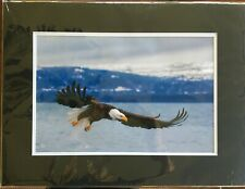 "Will Abair - Fine Art Photography - Eagle Flight - 12"" x 18"" print with mats"
