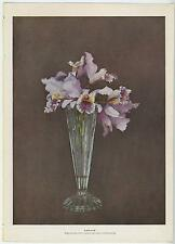 ANTIQUE PURPLE ORCHID FLOWERS IN GLASS VASE SHABBY ART OLD CHIC PICTURE PRINT