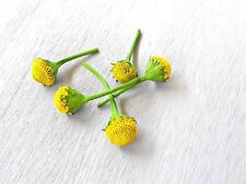 "60 count ""Fresh Edible"" Szechuan flowers Aka buzz button: Lemon drop variety."