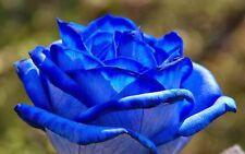 Climbing Blue Rose 100 Seeds Rare Fragrant Flowers Patio Terrace Garden Plants