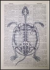 Vintage Turtle Skeleton Print Original Antique Dictionary Page Wall Art Picture