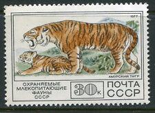 Russia Exotic 1977 Wild Cat - Tigers Stamp Mint!