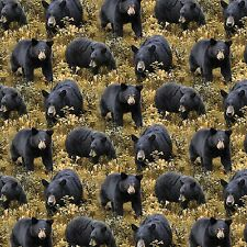 "Wild Wings Big Ben Black Bear 100% cotton 43"" Fabric by the yard"