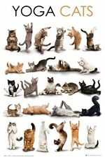 YOGA CATS POSTER (61x91cm)  PICTURE PRINT NEW ART
