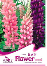 FD1577 Lupine Flower Seed Lupinus L. Seeds  Flower  ~1 Bag 15 Seeds~ Free Shippi