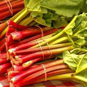 """Rhabarber """"Victoria"""", große Sorte, Obst, Gemüse, mehrjährig, winterhart, Pflanze"""