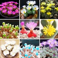 100 PCS Seeds 22 Kinds Mixed Succulent Lithops Pseudotruncatella Bonsai Plants N