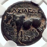 Seleukos II Kallinikos 246BC Seleukid RARE R2 Ancient Greek Coin BULL NGC i68956