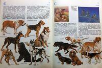 Zoo books Russian book Children stories Vintage russian books Russian kids books