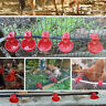20Pcs Chicken Drink Quail Waterer Bowls Bird Automatic Feeder Drinking-Cups Tool