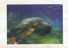turtle underwater coral 3D Lenticular Holographic Stereoscopic Picture Wall Art