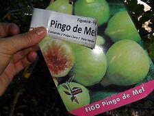 Rare figs * Honey Drop Fig Tree * Ficus Carica Pingo de Mel * 35 fresh seeds*