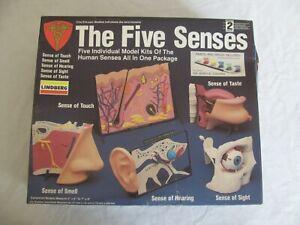 Lindberg Human Anatomy Diorama Science Model Kit The Five Senses #71360 NIB