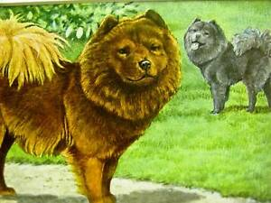 Agassiz Fuertes 1919 GRAY & RED CHOW Dog Print Matted