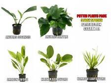 5 Potted Live Aquarium Plants Bundle - Anubias, Amazon Sword, Kleiner Bar, etc