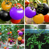 RA_ 200pcs Seeds Rainbow Cherry Tomato Organic Heirloom Fruit Vegetable Plant
