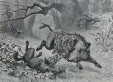 Dogs and boar.....wood engraving...1870s