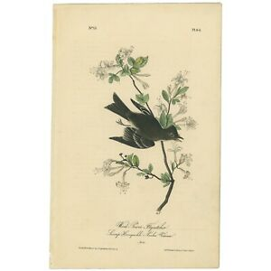 Audubon Octavo 1st Ed 1840 hand-colored lithograph Pl 64 Wood Pewee Flycatcher