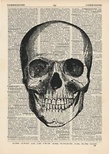 Anatomical Front Skull Dictionary Art Print, Medical Anatomy Vintage