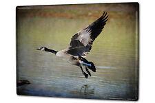 Tin Sign XXL Ravtive Vet Practice Canada goose