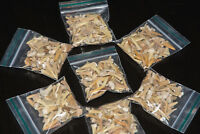 25g Shark Tooth Fossil Megalodon Aprox 35-55 White Teeth in a bag children party