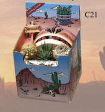 "Cactus Gift Box Arizona Grown 3 Plants 4"" Images Style Pot Southwest Succulent"
