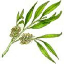 Tea Tree Oil -Roll ON Applicator- first aid in a bottle