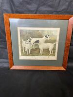 Antique Framed Print Of Fox Terriers From Cassells Illustrated Book Of The Dog