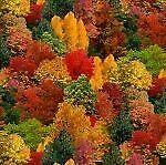 Landscape Medley~Fall Trees by Elizabeth's Studio