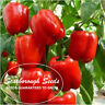 SCARBOROUGH SEEDS GIANT DEEP RED SWEET BELL PEPPER  50 SEEDS, SOLID FLESH