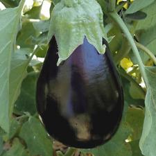 Eggplant Black Beauty Vegetable Garden Seeds 200+ NON-GMO USA FREE SHIPPING