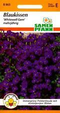 Blaukissen - Dunkelpurpur - Steingarten-Polsterstaude - Blumen Saatgut