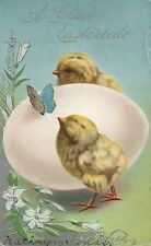 Easter Chicks Butterfly Postcard Series 317