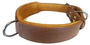 Tan Celtic Design Leather Staffy Staffordshire Bull Terrier Dog Collar Bulldog