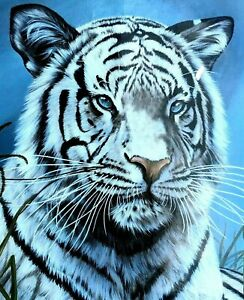 White Tiger Blue Eyed Picture Art Wall Poster 22 X 28 1987 #218