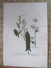 """Vintage Engraving,ACETOSA PRATENSIS,C.1740,WEINMANN,Botanical,20x13.5"""",Mezzotint"""