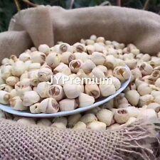 1Lb Premium All Natural Dried Lotus Seed, Lotus Nut, Usa Fast/Free Shipping!