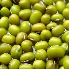 MUNG BEANS - 12 OZ, SPROUTING SEEDS - GROW SPROUTS, CHINESE FOOD, NUTRIOUS BEAN