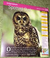 Endangered Species Animal Card - Birds - Spotted Owl