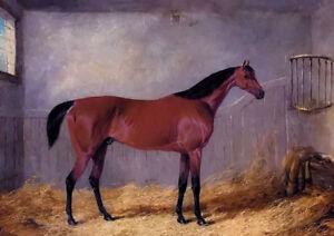 Oil painting john frederick herring the duke of graftons bolivar in stable horse