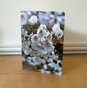 Blank Greetings Cards Flower Spring Birthday All Occasions Notecard