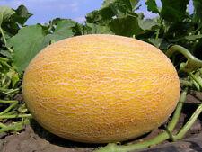 Melon seeds Amal organic seeds from Ukraine