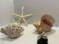 4 Natural Sea Shell's Queen Conch, Large Clam Shell, Hawkwing Conch & Star Fish