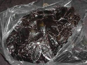 WHOLESALE LOT OF 144 FAKE COCKROACHES INSECT ROACH BUGS pest  prank gag joke