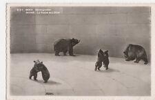 Switzerland, Bern, Barengraben, Bears RP Postcard, B263