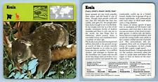 Koala - Mammals - 1970's Recontre Safari Wildlife Card