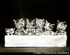 Kittens Having a Tea Party - 1914 - Historic Photo Print