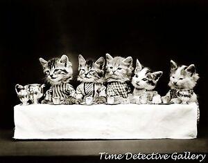 Kittens Having a Tea Party - 1914 - Historic Photo Print